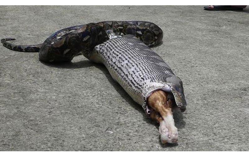 沈阳修路穵条大蛇图片
