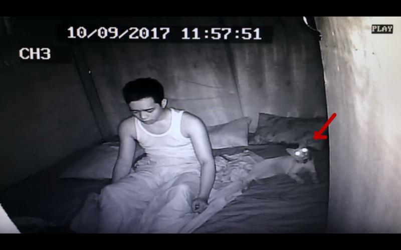 想看「睡覺時貓咪在做什麼」,沒想到竟拍下自己的「離奇夢遊」!