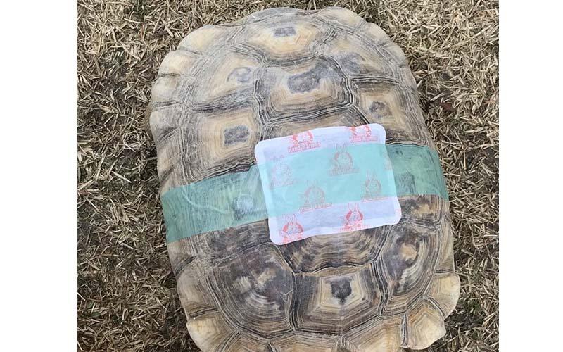 烏龜凍到走不動了,他在龜殼上黏一個暖暖包讓它暖活,結果「龜龜動了!」