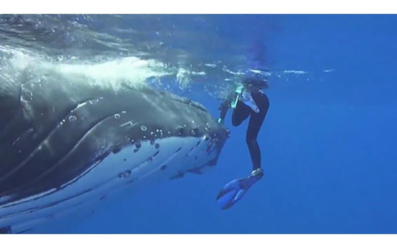 她被「暖心鯨魚藏鰭下」滿臉問號?往旁邊一看才發現「撿了一命」…