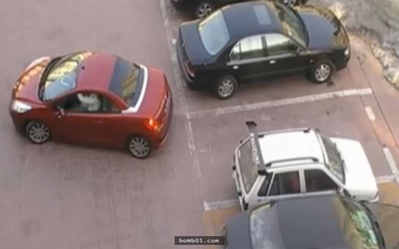 紅車女子在倒車時竟遇上「白目白車搶佔停車位」...但下一秒她的神反擊讓大家都拍手叫好!