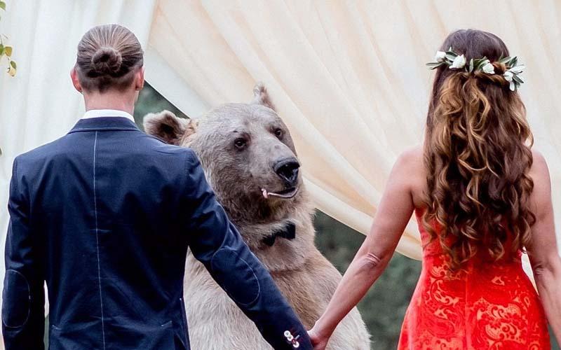 戰鬥民族新人請來重達130Kg的大棕熊當婚禮的見證人,這場面根本童話故事!