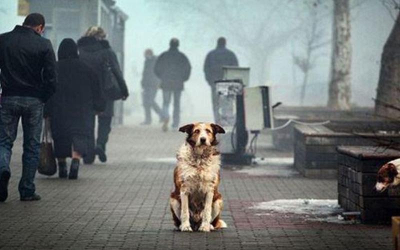 全世界為什麼只有「德國沒有流浪狗」?背後的真相,值得我們學習!