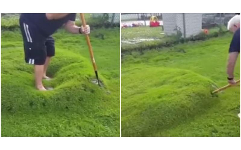 大雨過後綠色草皮長出「神秘巨大水泡」!用力刺破竟噴射出神秘汁液!:跟擠痘痘一樣療癒(影)