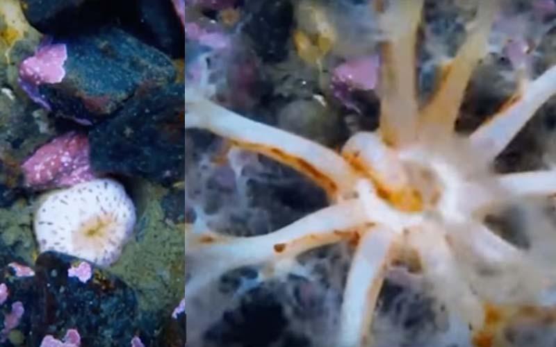這段「海參進食畫面」魔性滿分!炸開10隻觸手猛塞食物,根本餓壞了!