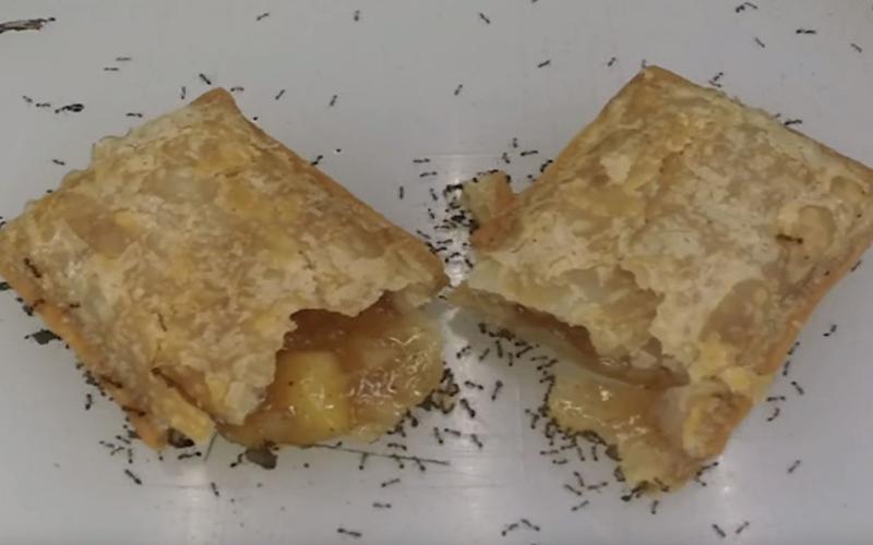 他進貢整塊「麥當勞蘋果派」給螞蟻,螞蟻大軍揪團「慢慢整個吞噬」最後畫面太猛!
