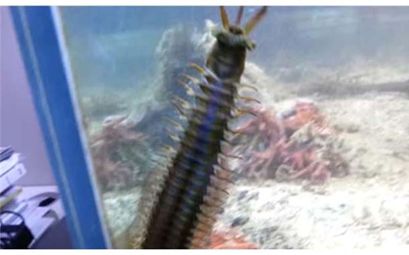 水族箱裡的魚跟珊瑚一直莫名減少,清理才發現原來兇手長得好嚇人!