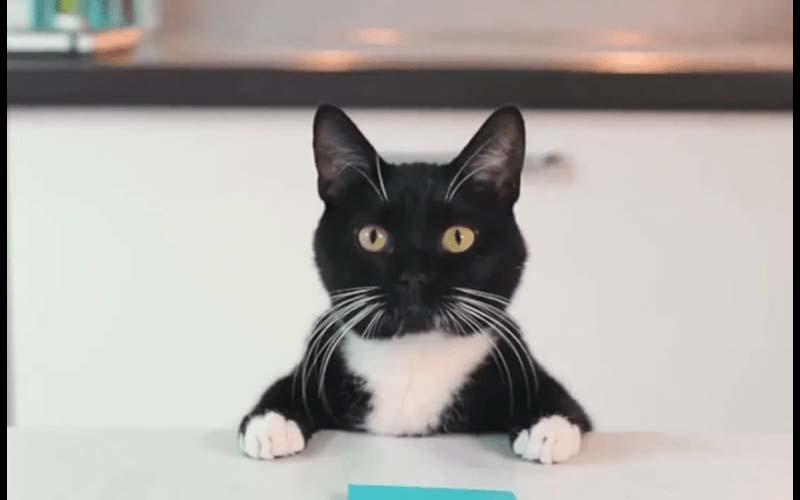 貓咪真的是外星人無誤!各種奇特行徑真是讓人摸不透啊!