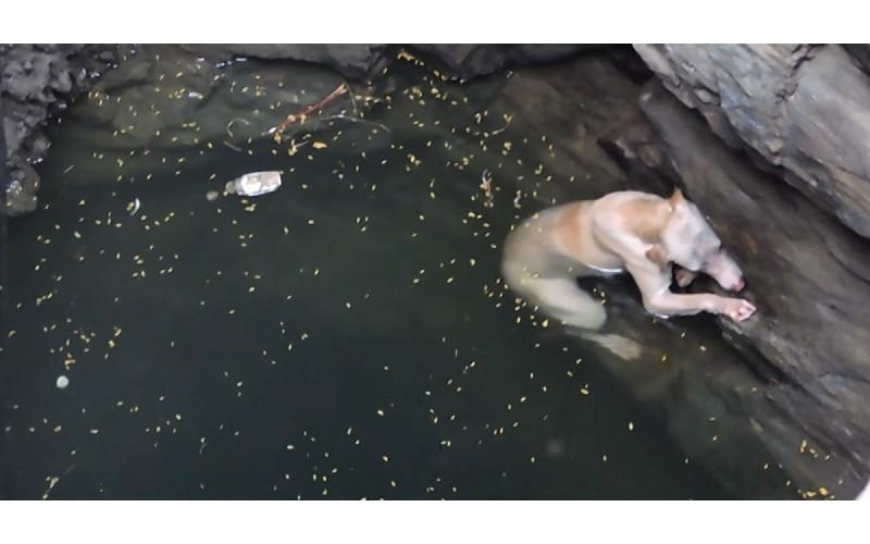 掉進井裡面的狗狗顫抖地用盡力氣求生 快耗盡體力時⋯好幾個身影出現了