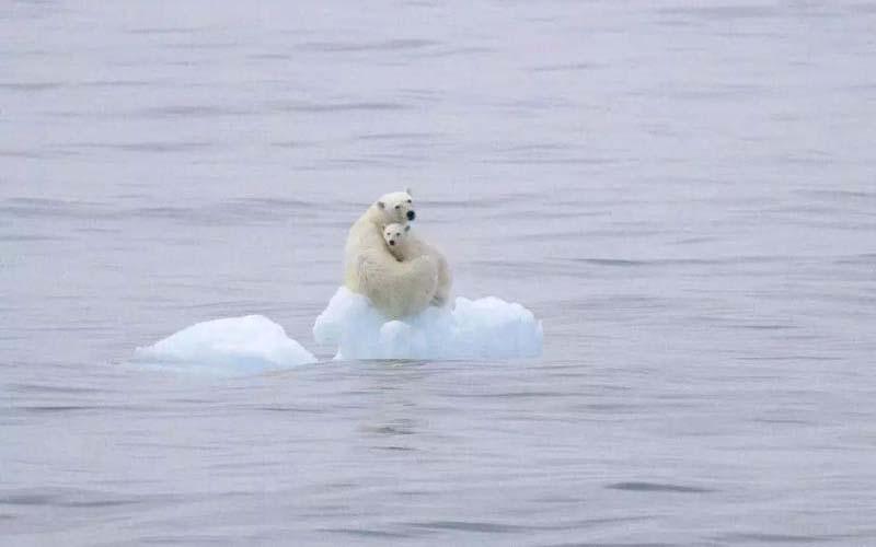 最該上熱搜的話題卻不被人類所重視「一個無冰的北極帶來的後果,可能是人類難以承受的。」