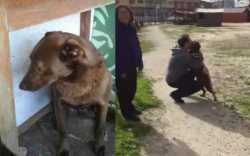狗狗走失兩年,在收容所重新遇到主人,找回熟悉感的那一刻逼哭所有人!
