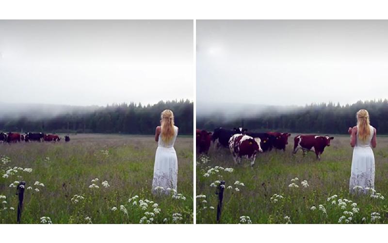 迪士尼公主?北歐正妹「空靈性嗓音」高聲吟唱能將遠方牛群召喚回來