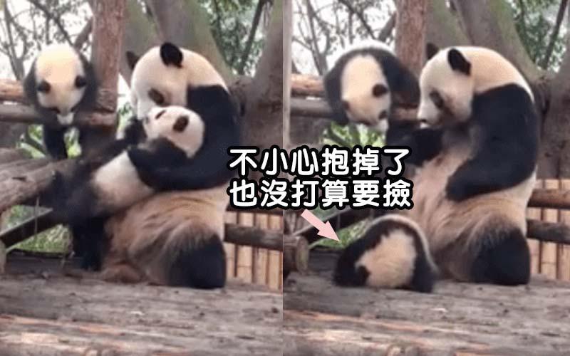 熊貓媽媽對自己的小孩超粗魯,網友覺得又可愛又好笑「求寶寶心理陰影面積啊」