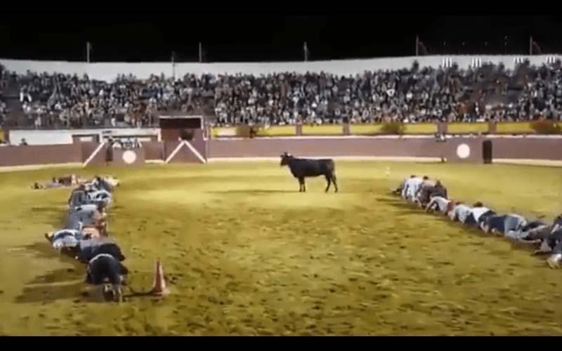 據說公牛不會撞比自己矮小的生物?他們冒險實測笑慘網友「喂..不要這樣玩牛啦!」